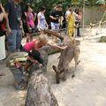 Le grand ZOO de SINGAP. Ils peuvent caresser les kangourous.