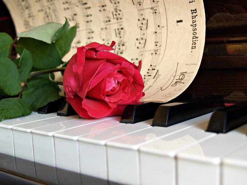 rose-1437010_1920