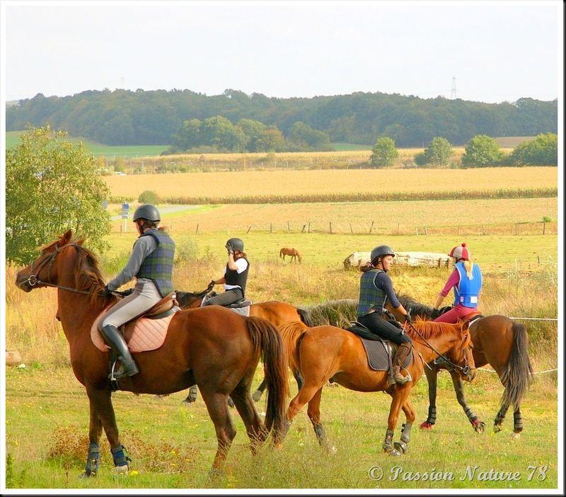 Le 78 département du cheval (18)