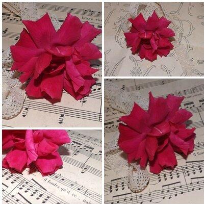 Roses pour Katia (5)
