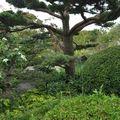 jardin japonais 0080007