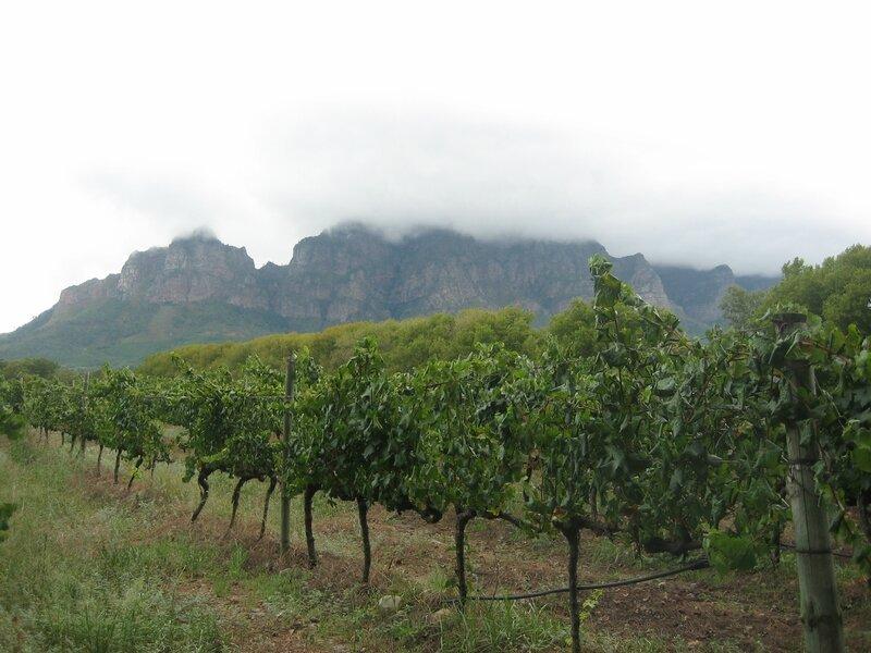 Vignobles Boschendal