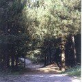 Le Bois de Pins à la sortie de Cayeux Brigthon