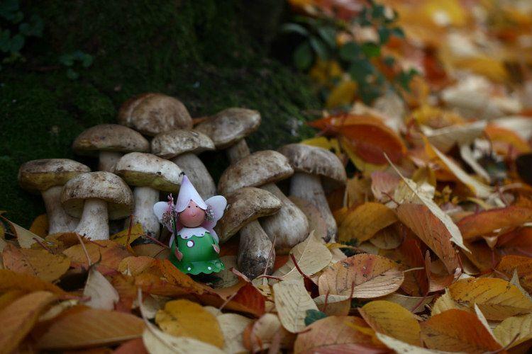 Fée des champignons_12 14 11_1392