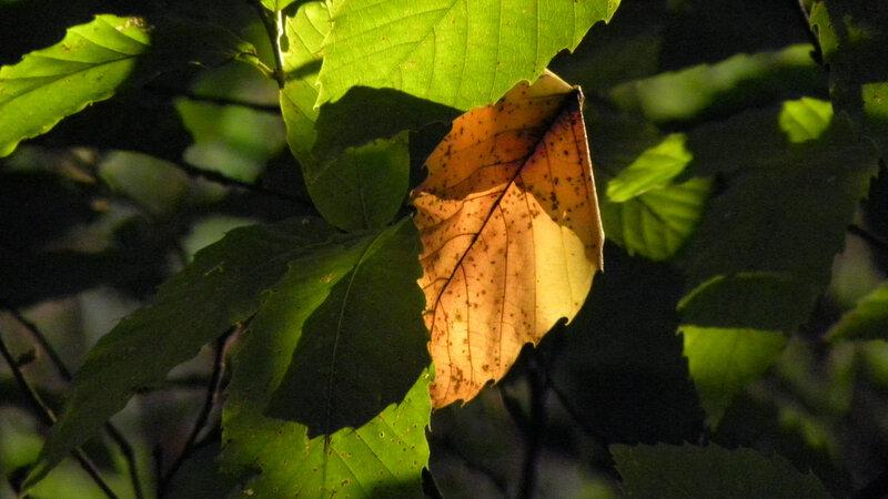 branches et feuilles (136)