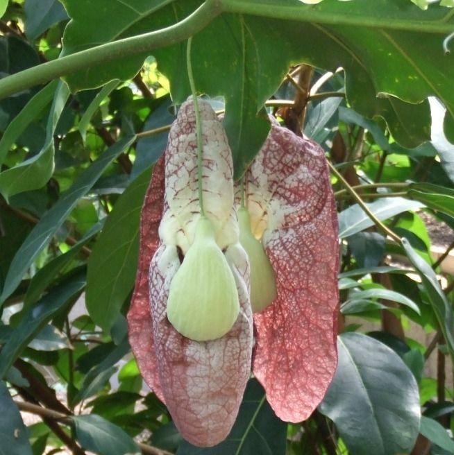 fleur chelou