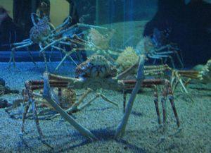 crabes