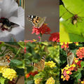 Insectes...