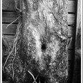 Un arbre bien féminin