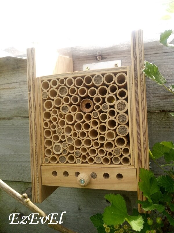 bee home 2 EzEvEl abeilles
