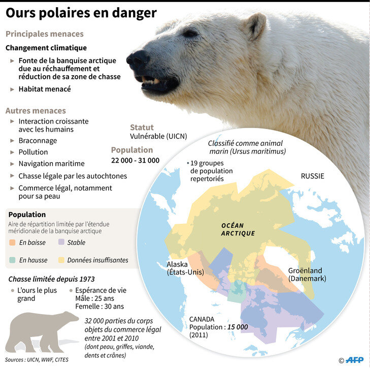 Ours-polaires-danger_1_729_724