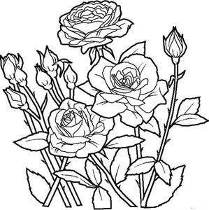 coloriages-fleur-roses_jpg