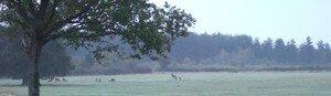 2006_0930Blois_St_Av_Chambord0058