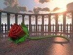 rose_320