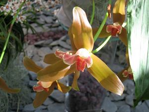 blog_orchid2