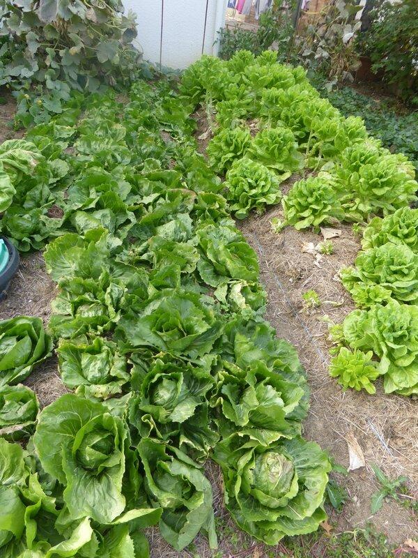 24-salade (8)
