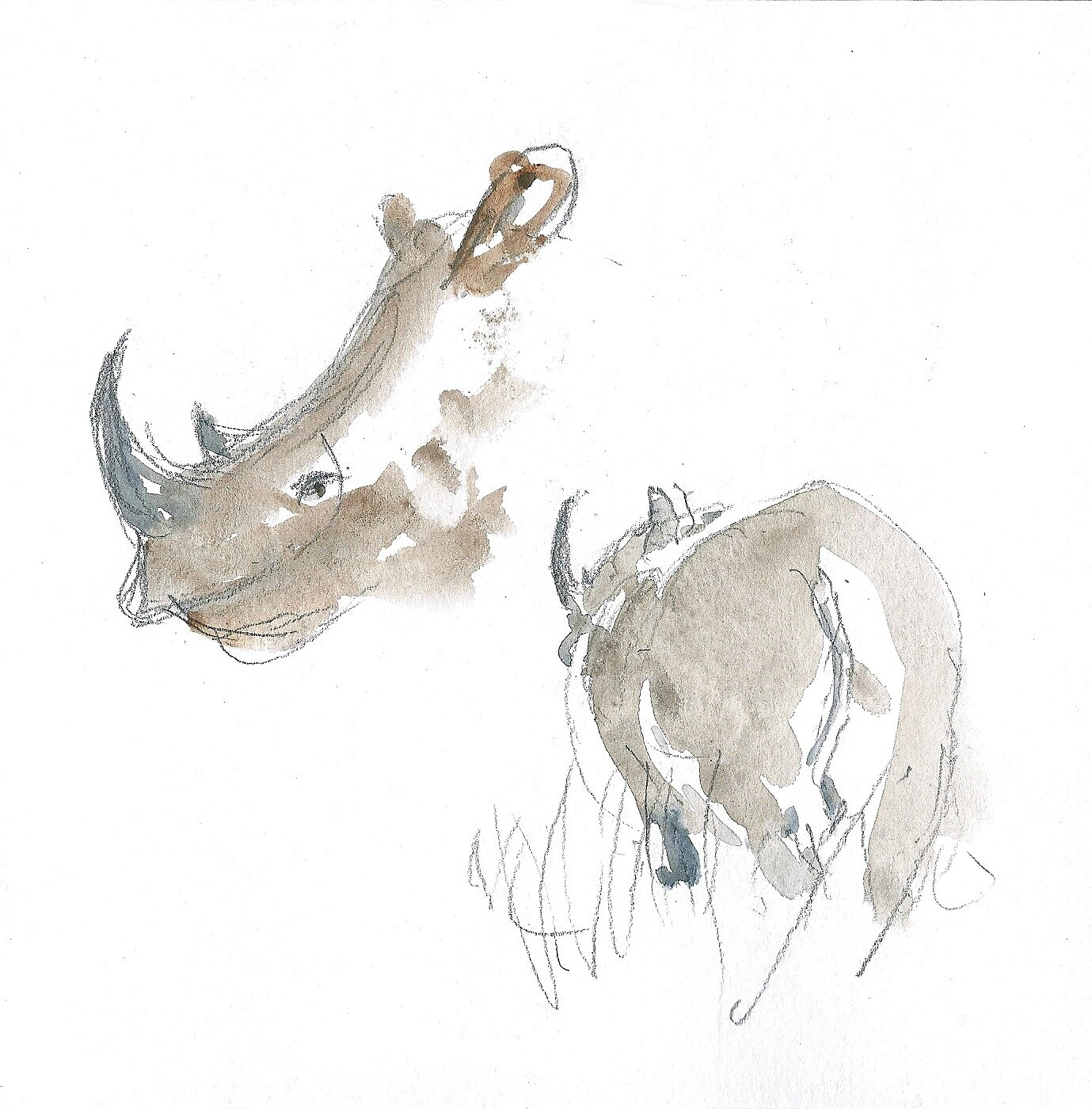 Madikwe Rhinos