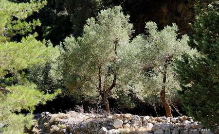 gorges_3b__olivier