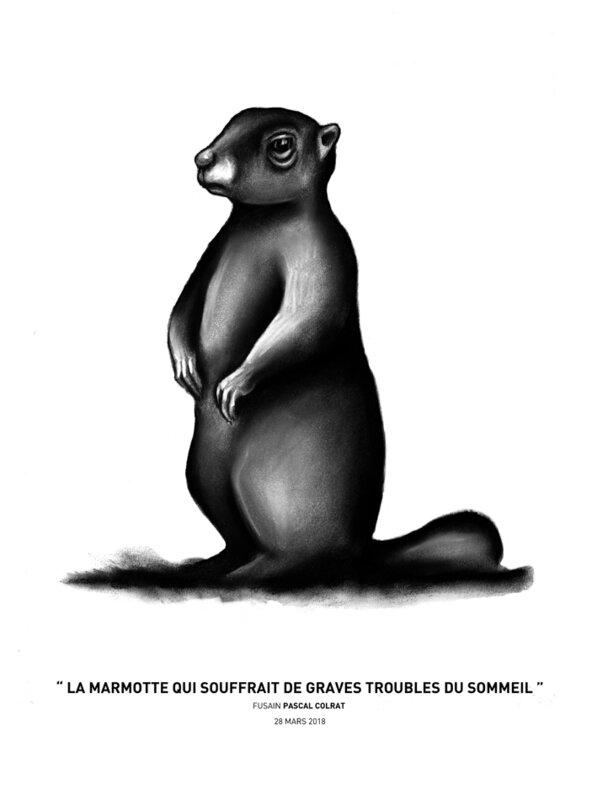 __la_marmotte_qui_souffrait_de_graves_troubles_du_sommeil___