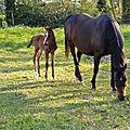 Latika, la petite brown, à trois jours et demi d'âge
