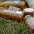 Des fleurs d'Arnica macèrent dans l'huile au soleil