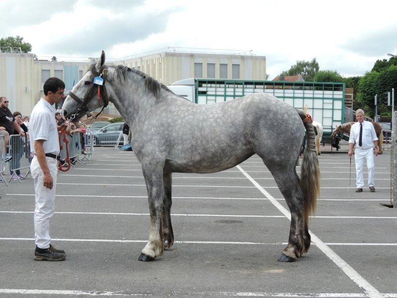 Etoile du Gy - 18 Juin 2016 - Concours d'élevage local - St Pol sur Ternoise - 5e (2 ans)