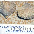 CYCLOTHYRIS VESPERTILIO 25.MOUTHIER