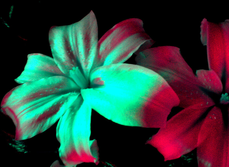 gheselle-catherine-flowers-at-night
