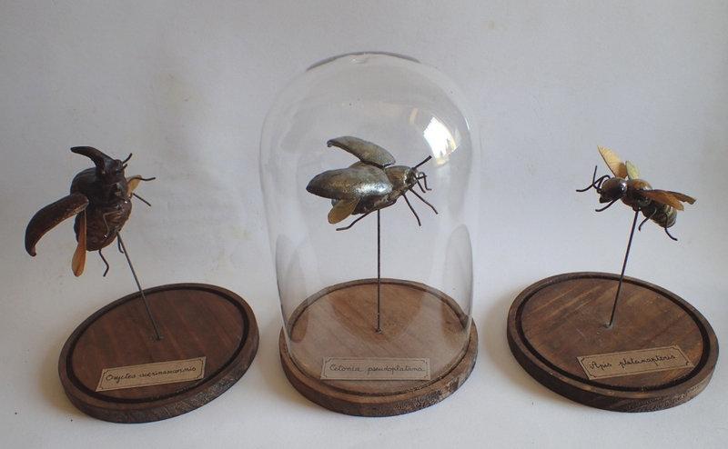 Anne Tassin- Insectes hybrides2 - Copie
