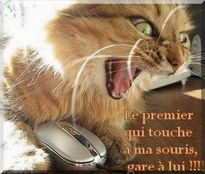 Le premier qui touche à ma souris gare à lui !!!