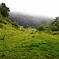 Plateau du Cournau 1150m