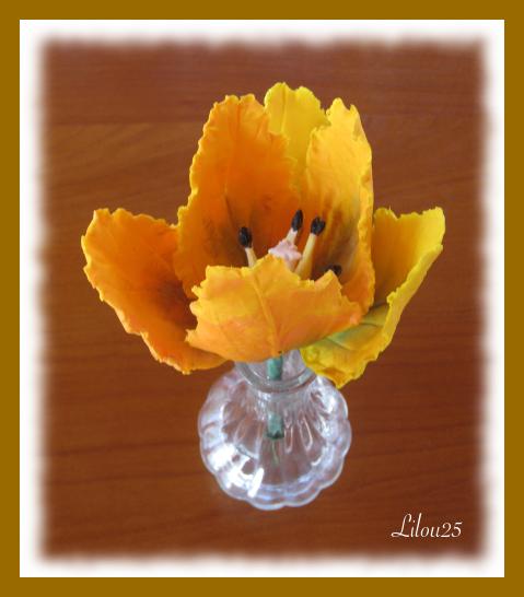tulipe06