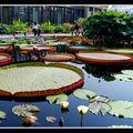 2008-07-20 - WE 16 - Longwood Gardens 033