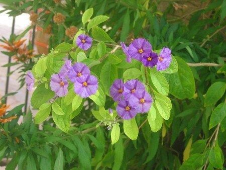 Fleurs_6
