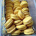 Coques Macarons Citron