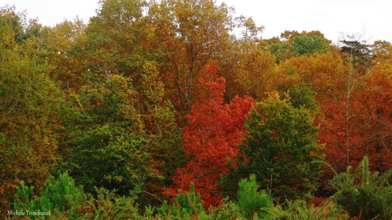Linxe automne 24101513
