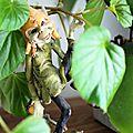 Challenge photo ♥ un peu de moi ♥ 1 : mon coin vert