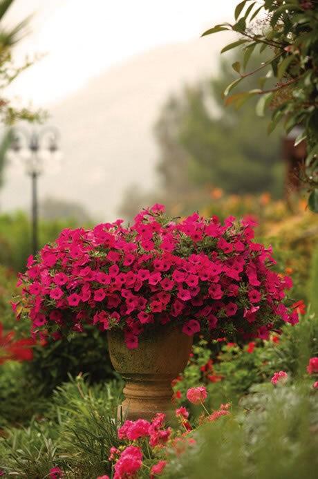 jardin dans la decobelge (326)