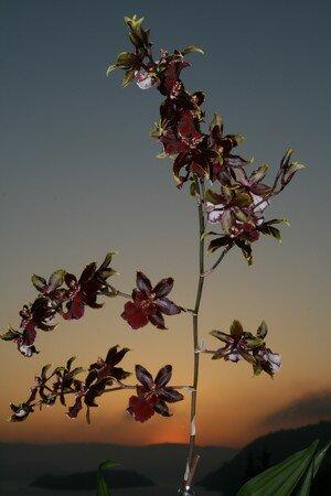 orkid__i_motlys_april_07