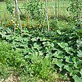 carottes, concombres, tomates