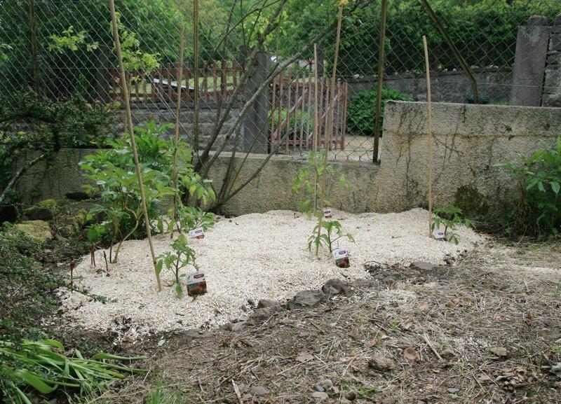 a_petits_pas_notre_jardin_tomates