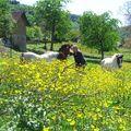 Poney fleuris en Isère