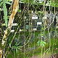 Rêveries et safari quelque part dans le jardin