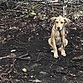 Hope 1 trouvée avec Syrius enchaînés dans les bois