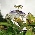 Fleurs de Leon 24061635
