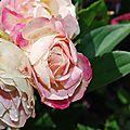 Fleur au jardin 21 06 2012 048