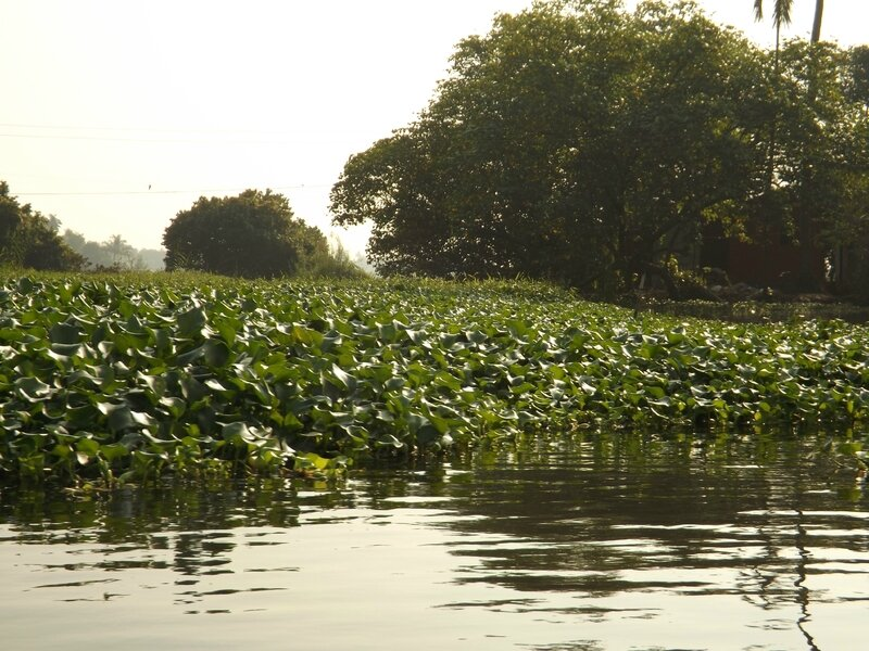 Alleppey Backwaters (3)