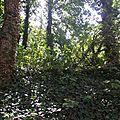 jardin sauvage -Nono (2)