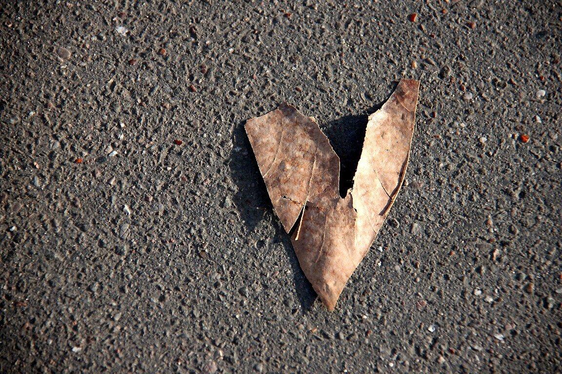 Coeur automne_5885