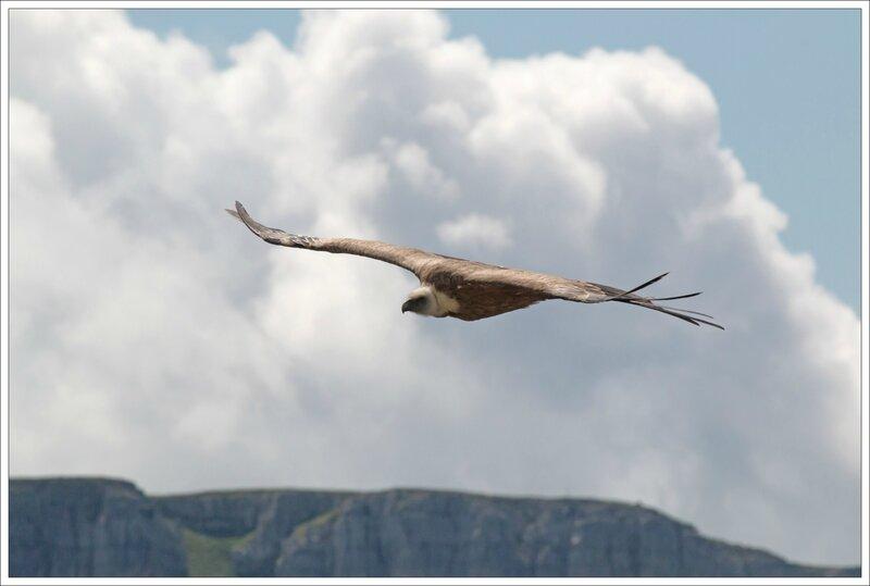 Haut Aragon 120615 Mondoto 71 vautour nuage montagne